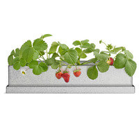 Strawberry Windowsill Growbox