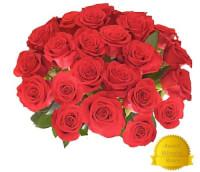 25 GIANT Fragrant Long Stem Roses