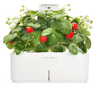 Smartpot Strawberry Indoor Grow Kit