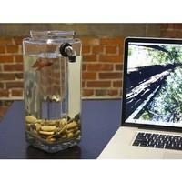 NoClean Aquariums: Self-Clean Aquarium