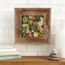 Succulent Living Wall Planter Kit