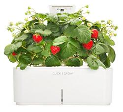 Smartpot Strawberry Indoor Grow Kit