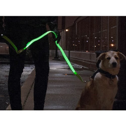 4id: The LED Lite Up Leash