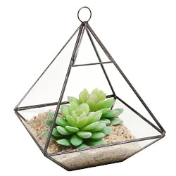Glass Prism Air Plant Terrarium