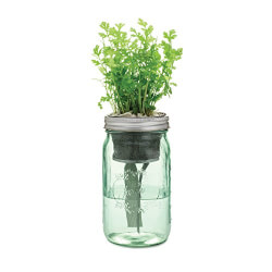 Indoor Cilantro Herb Kit