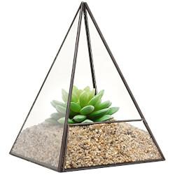 Succulent Plant Terrarium Pyramid