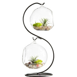 Glass Plant Terrarium with Stand