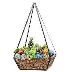 Modern Glass Pyramid Terrarium