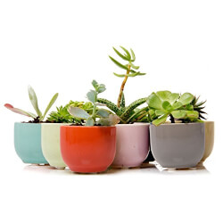 Ceramic Succulent Holders